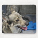 Swedish Vallhund  Mouse Pad