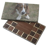 Sweet Basset Hound Assorted Chocolates