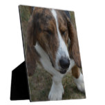 Sweet Basset Hound Plaque