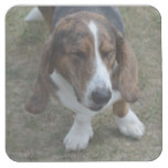 Sweet Basset Hound Square Paper Coaster
