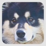Sweet Finnish Lapphund Stickers