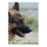 Sweet German Shepherd Dog Card