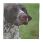 Sweet German Shorthaired Pointer Ceramic Tile