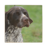 Sweet German Shorthaired Pointer Wooden Coaster