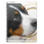 Sweet Greater Swiss Mountain Dog Notebook