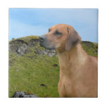 Sweet Rhodesian Ridgeback Dog Ceramic Tile