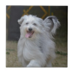 Sweet Sheepdog Ceramic Tile