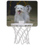 Sweet Sheepdog Mini Basketball Hoop