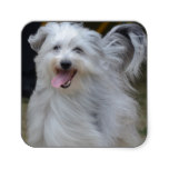 Sweet Sheepdog Square Sticker