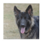Sweet Shiloh Shepherd Ceramic Tile