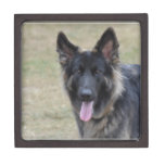 Sweet Shiloh Shepherd Jewelry Box