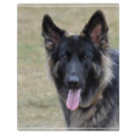 Sweet Shiloh Shepherd Plaque
