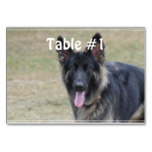 Sweet Shiloh Shepherd Table Number