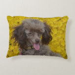 Sweet Tiny Brown Poodle Accent Pillow