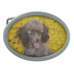 Sweet Tiny Brown Poodle Belt Buckle