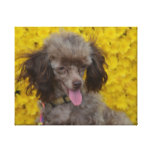 Sweet Tiny Brown Poodle Canvas Print
