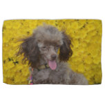 Sweet Tiny Brown Poodle Hand Towel