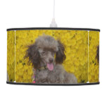 Sweet Tiny Brown Poodle Hanging Lamp