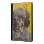 Sweet Tiny Brown Poodle iPad Air Case