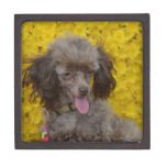 Sweet Tiny Brown Poodle Jewelry Box