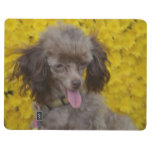 Sweet Tiny Brown Poodle Journal
