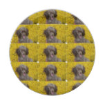 Sweet Tiny Brown Poodle Paper Plate