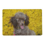 Sweet Tiny Brown Poodle Placemat