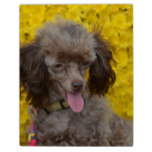 Sweet Tiny Brown Poodle Plaque