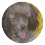 Sweet Tiny Brown Poodle Plate
