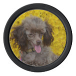 Sweet Tiny Brown Poodle Poker Chips