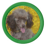 Sweet Tiny Brown Poodle Poker Chips Set