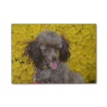 Sweet Tiny Brown Poodle Post-it Notes