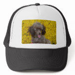 Sweet Tiny Brown Poodle Trucker Hat