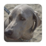 Sweet Weimaraner Drink Coaster