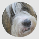 Tibetan Terrier Stickers