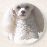 Toy Poodle Coaster