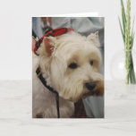West Highland White Terrier Greeting Cards