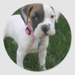 White Boxer Puppy Sticker