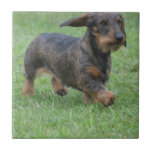 Wire Haired Dachshund Tile