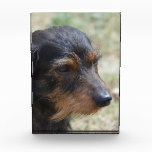 Wire Haired Daschund Dog Acrylic Award