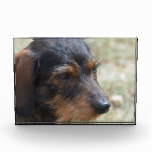 Wire Haired Daschund Dog Award