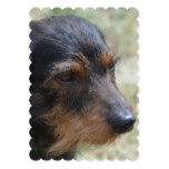 Wire Haired Daschund Dog Card