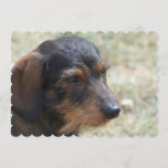 Wire Haired Daschund Dog Invitation
