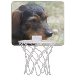 Wire Haired Daschund Dog Mini Basketball Hoop