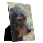 Wire Haired Daschund Dog Plaque