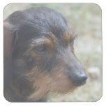 Wire Haired Daschund Dog Square Paper Coaster