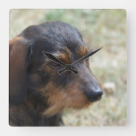Wire Haired Daschund Dog Square Wall Clock