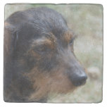 Wire Haired Daschund Dog Stone Coaster