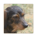 Wire Haired Daschund Dog Wood Coaster