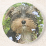 York Terrier Dog Coasters